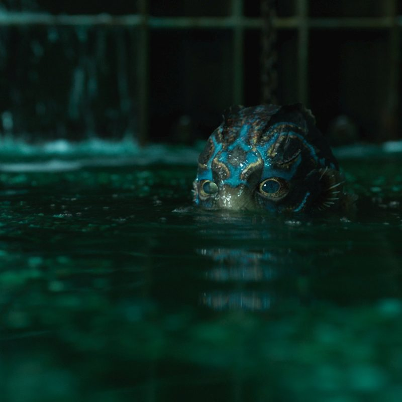10 Latest The Shape Of Water Wallpaper FULL HD 1080p For PC Background 2018 free download guillermo del toro told us about making monsters in his creepy ass 800x800