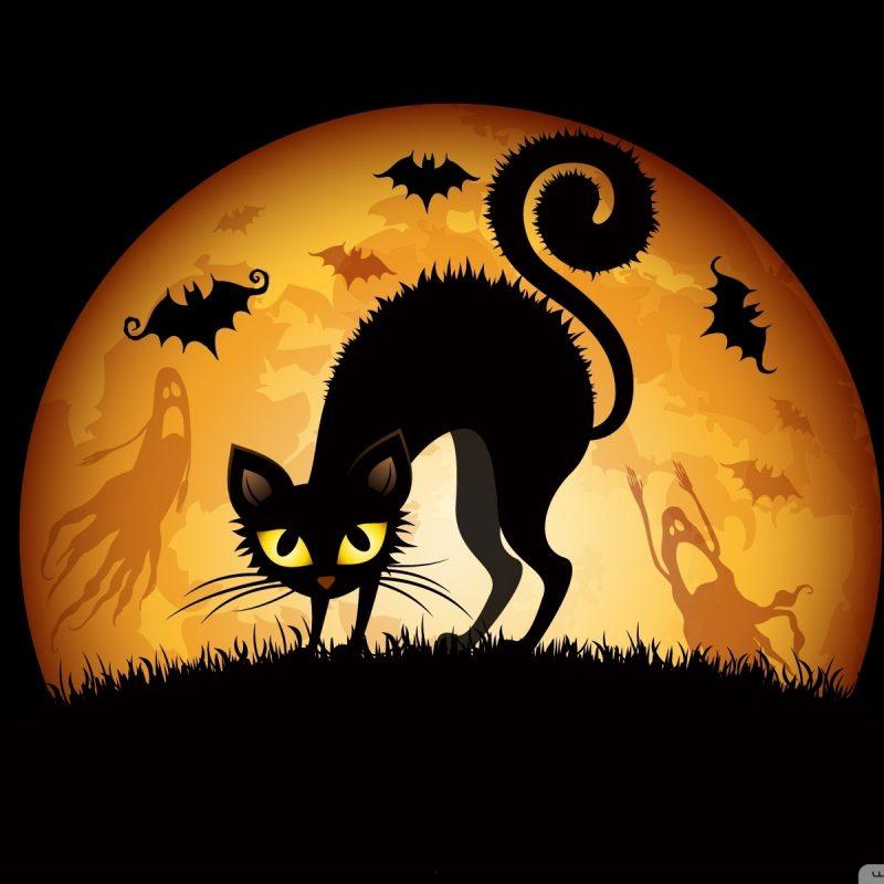 10 New Halloween Black Cats Wallpaper FULL HD 1920×1080 For PC Desktop 2020 free download halloween 2012 e29da4 4k hd desktop wallpaper for 4k ultra hd tv 800x800
