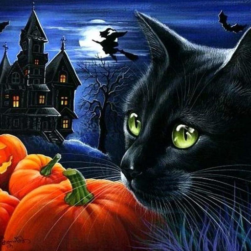 10 New Halloween Black Cats Wallpaper FULL HD 1920×1080 For PC Desktop 2020 free download halloween black cats wallpapers wallpaper cave 800x800