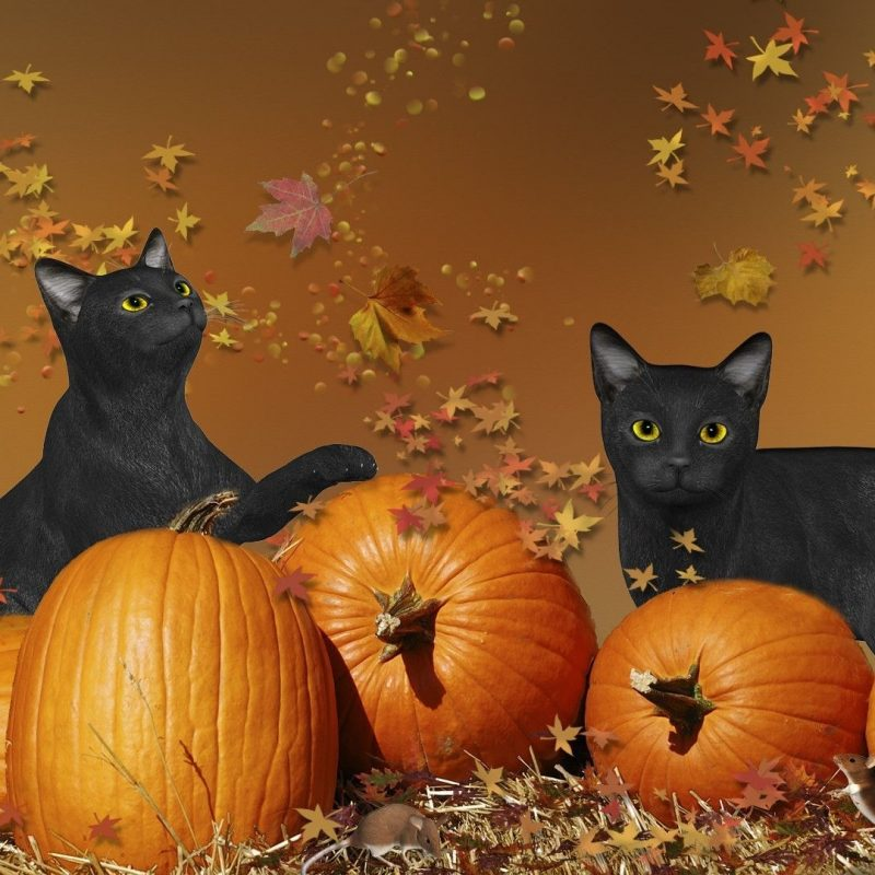 10 New Cute Halloween Kitten Wallpaper FULL HD 1080p For PC Desktop 2018 free download halloween cats wallpaper 800x800