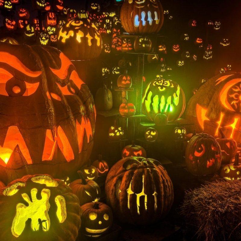 10 Most Popular Halloween Hd Wallpapers 1080P FULL HD 1920×1080 For PC Desktop 2020 free download halloween free wallpaper media file pixelstalk 800x800