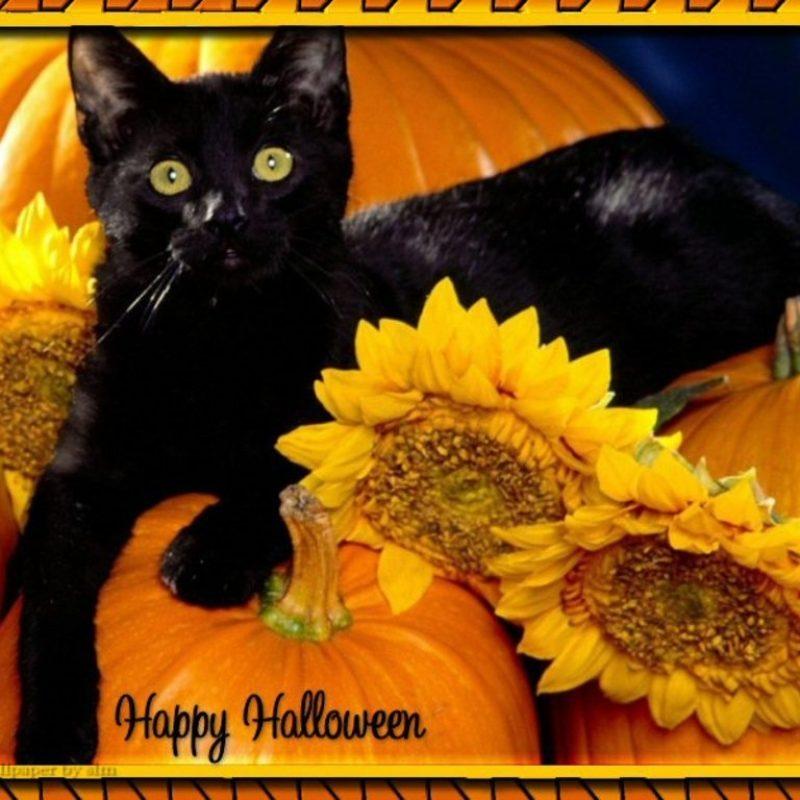10 New Halloween Black Cats Wallpaper FULL HD 1920×1080 For PC Desktop 2020 free download halloween screensavers free free beautiful halloween cat wallpaper 800x800