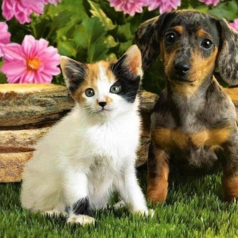 10 Most Popular Pictures Of Puppies And Kitties FULL HD 1080p For PC Background 2018 free download happy kitten morning cute kittens a puppies free ebooks http 800x800