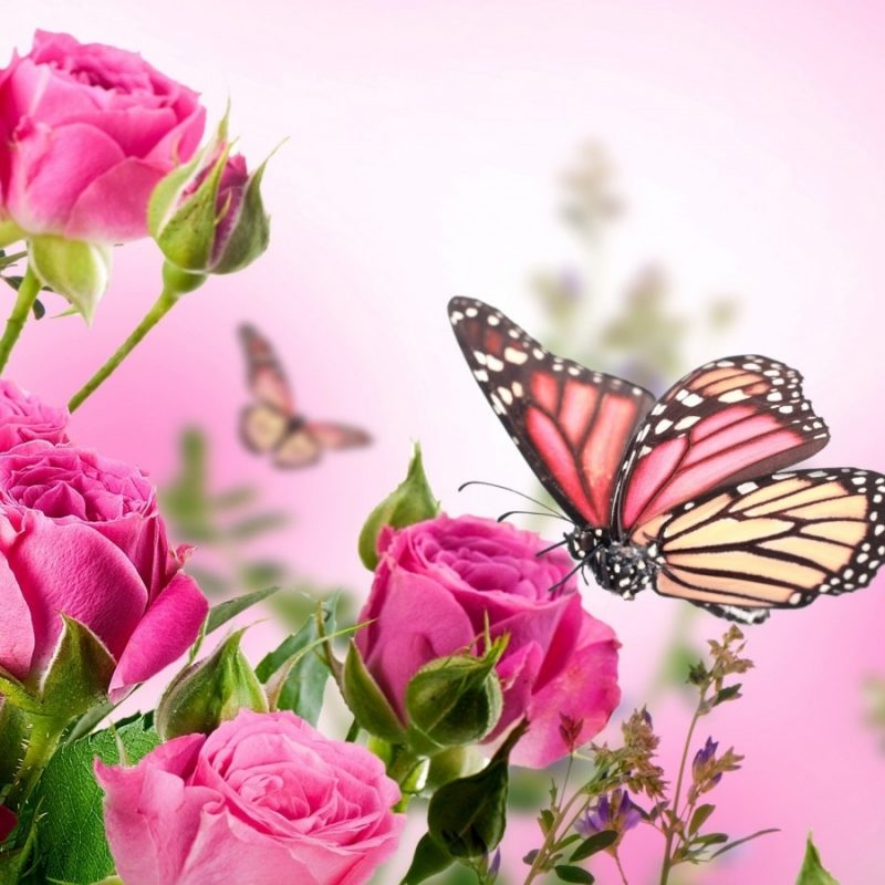 10 Most Popular Flowers And Butterflies Wallpaper FULL HD 1920×1080 For PC Background 2020 free download hd adoring pink butterflies wallpaper fd pinterest images of flowers 800x800