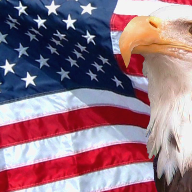 10 Latest American Flag Eagle Background FULL HD 1080p For PC Desktop 2021 free download hd american flag with eagle background 800x800