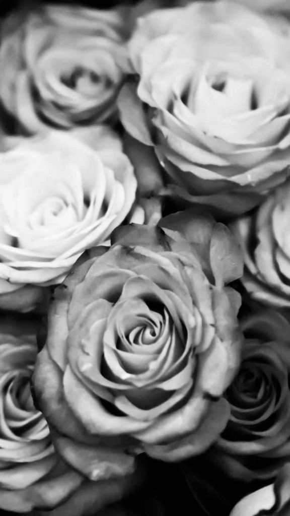 10 Most Popular Black And White Rose Wallpaper FULL HD 1920×1080 For PC Background 2018 free download hd ayleet black and white rose iphone wallpaper pattern full 576x1024