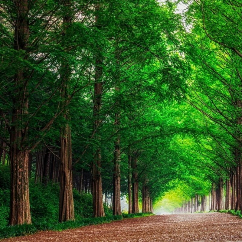 10 Top Forest Wallpaper Full Hd FULL HD 1080p For PC Desktop 2020 free download hd background green forest trees straight road wallpaper 800x800