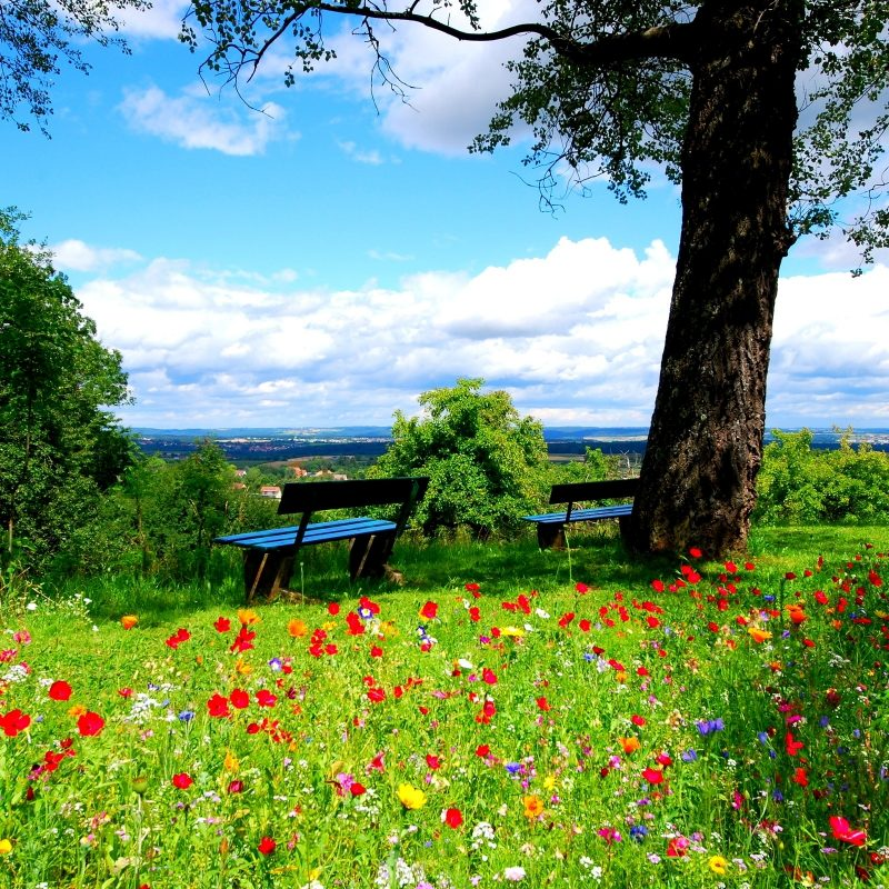 10 Top Beautiful Nature Background Hd FULL HD 1920×1080 For PC Background 2020 free download hd beautiful nature background media file pixelstalk 800x800