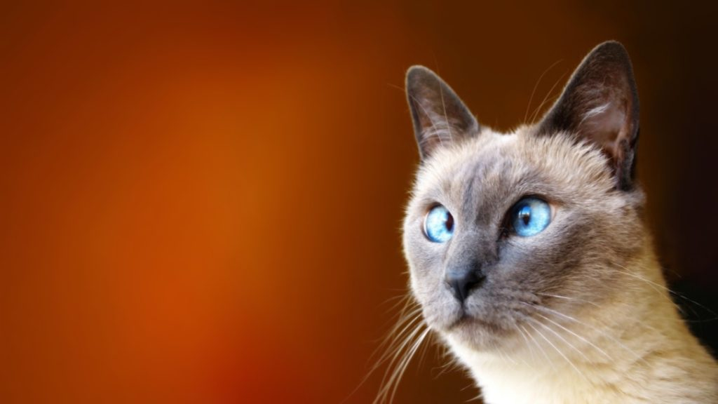 10 New Funny Cat Wallpaper Hd FULL HD 1920×1080 For PC Background 2018 free download hd cat funny images wallpaper 1024x576