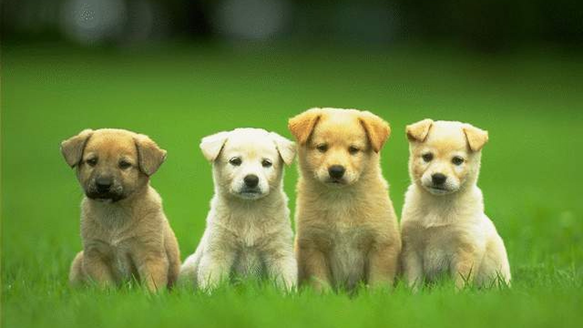 hd cute and funny pics of dogs and puppies