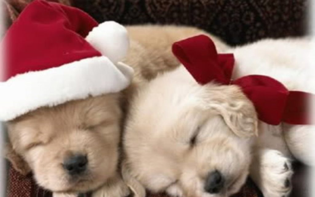 10 New Cute Puppy Christmas Pictures FULL HD 1920×1080 For PC Background 2020 free download hd cute puppy christmas images 1024x640