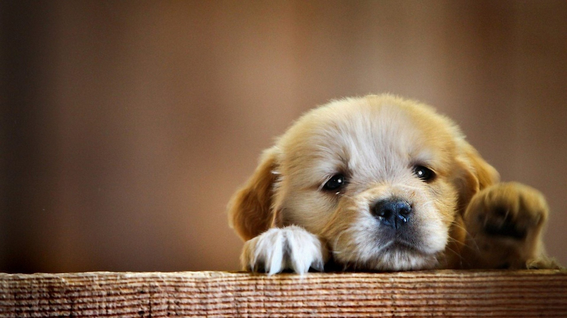 10 Most Popular Cute Puppy Wallpaper Hd FULL HD 1920×1080 For PC Background