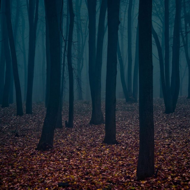 10 Top Hd Wallpapers Dark Forest FULL HD 1080p For PC Background 2020 free download hd dark forest hd desktop wallpaper instagram photo background 800x800