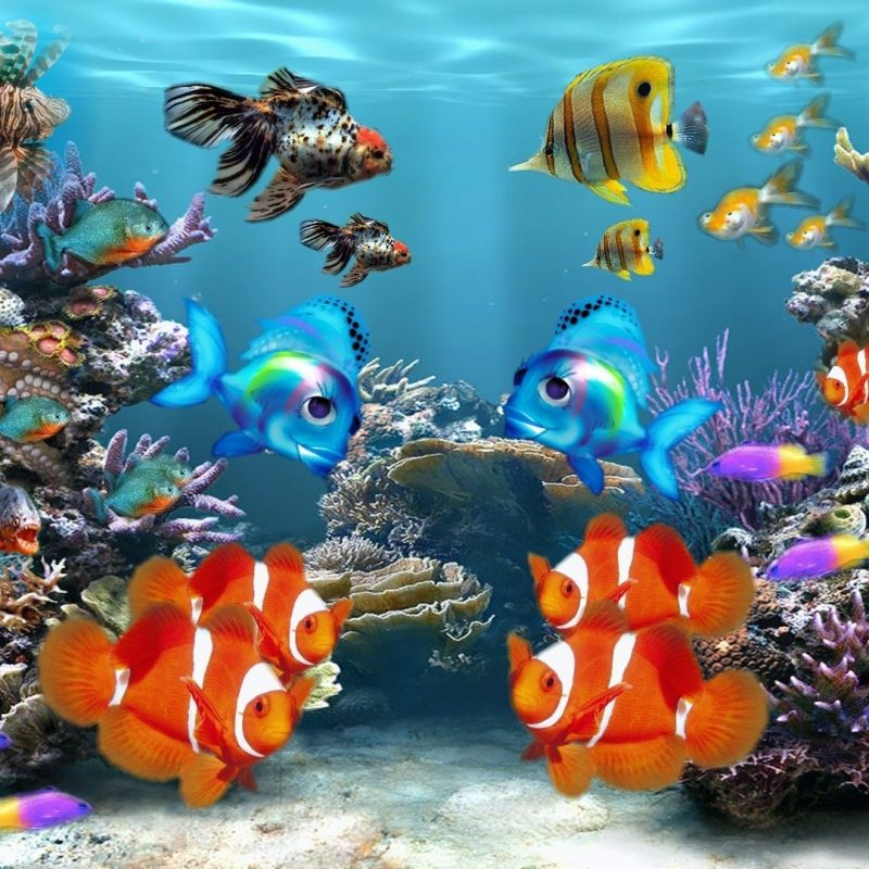 10 Most Popular Tropical Fishes Wallpapers Hd FULL HD 1920×1080 For PC Background 2018 free download hd fish background 8078 hdwpro 800x800
