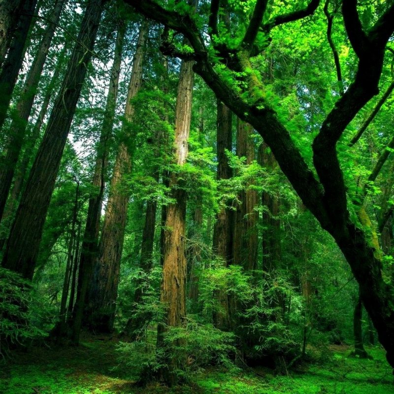 10 Top Forest Wallpaper Full Hd FULL HD 1080p For PC Desktop 2020 free download hd forest wallpaper c2b7e291a0 download free high resolution backgrounds 800x800