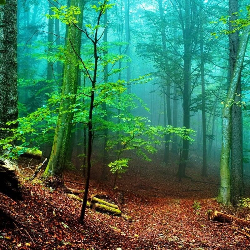 10 Best Forest Hd Wallpapers 1080P FULL HD 1080p For PC Desktop 2020 free download hd forest wallpapers wallpaper cave 800x800