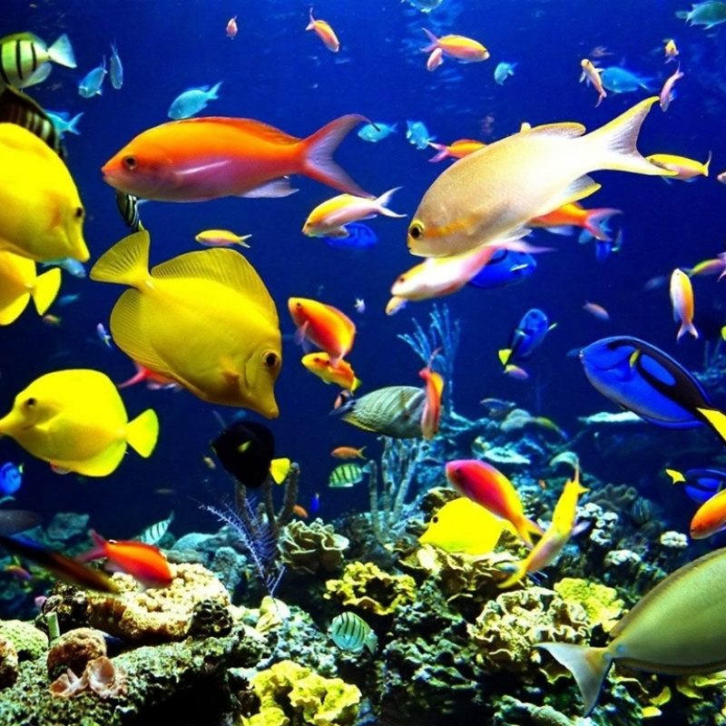 10 Most Popular Tropical Fishes Wallpapers Hd FULL HD 1920×1080 For PC Background 2018 free download hd laptop wallpaper wallpaper of laptop hd wallpapers of hd laptop 800x800