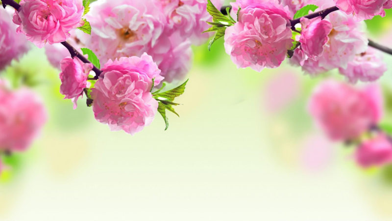 10 Latest Spring Desktop Wallpaper Hd FULL HD 1080p For PC Background 2020 free download hd spring wallpapers for desktop wallpaper cave 4 800x450