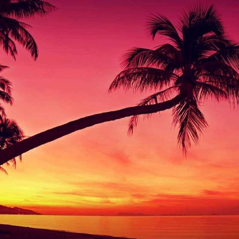10 Latest Palm Tree Sunset Wallpaper FULL HD 1920×1080 For PC Desktop 2018 free download hd tropical sunset palm trees silhouette beach wallpapers hd 800x800