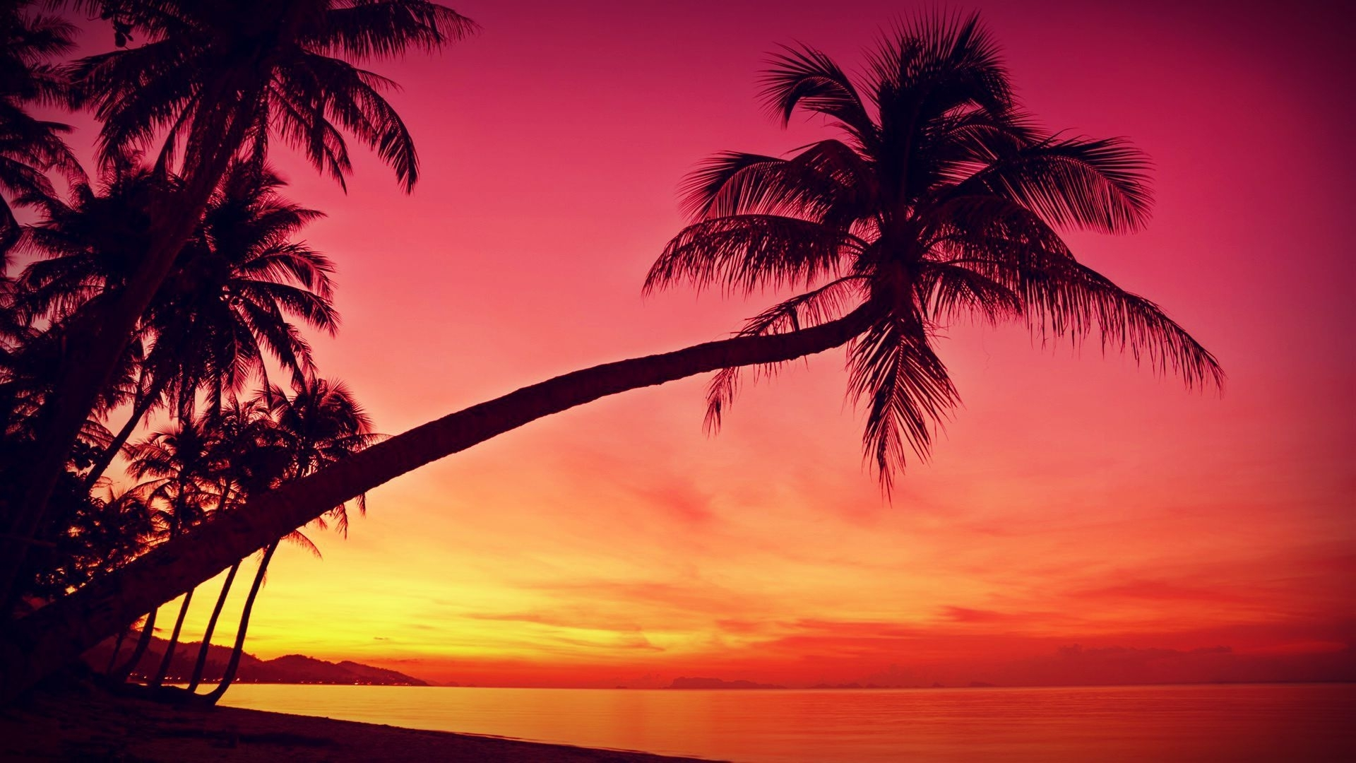 hd tropical, sunset, palm trees, silhouette, beach wallpapers - hd