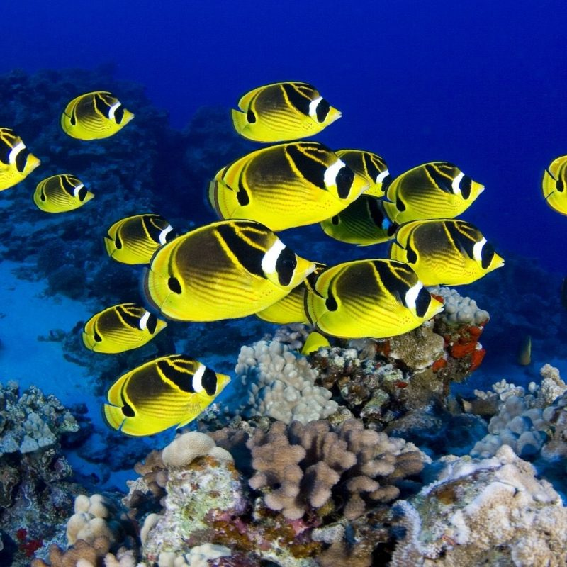 10 Most Popular Tropical Fishes Wallpapers Hd FULL HD 1920×1080 For PC Background 2018 free download hd wallpaper wallpaper background 1920 x 1080 id 364825 800x800