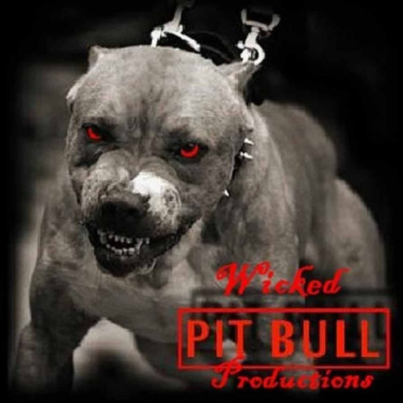 10 New Wallpaper Of Pit Bulls FULL HD 1080p For PC Desktop 2018 free download hd wallpapers pitbull dog wallpapers pitbulls pinterest hd 800x800