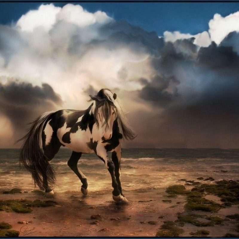 10 Best Free Horse Wallpaper For Computer FULL HD 1080p For PC Background 2018 free download horse desktop wallpapers wallpaper cave horse wallpaper horse and 800x800