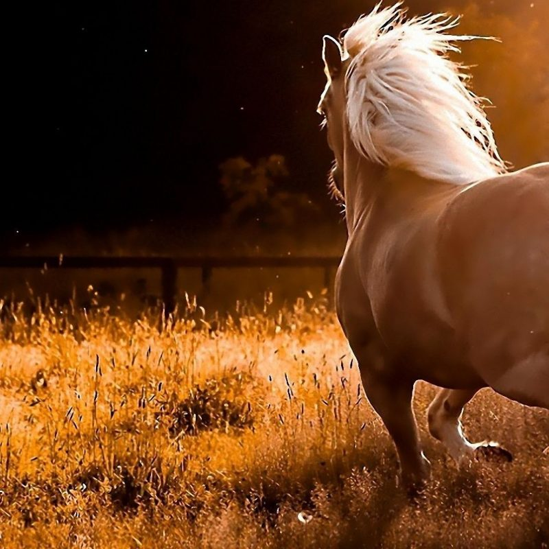 10 Best Free Horse Wallpaper For Computer FULL HD 1080p For PC Background 2018 free download horse wallpaper for computer c2b7e291a0 800x800