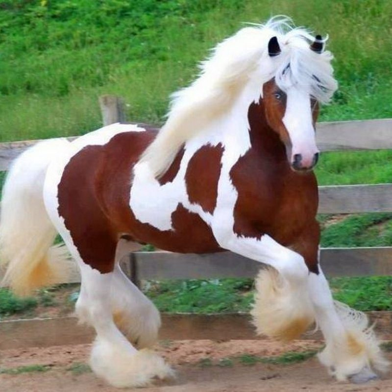 10 Best Free Horse Wallpaper For Computer FULL HD 1080p For PC Background 2018 free download horses wallpapers free hd wallpapers 800x800