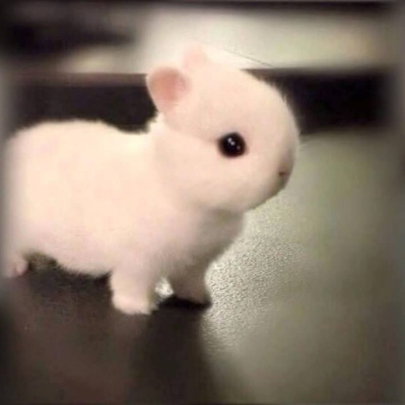 10 Most Popular Cute Baby Bunny Pictures FULL HD 1920×1080 For PC Desktop 2018 free download how adorable is this little baby bunny hes so tiny and cute he 800x800