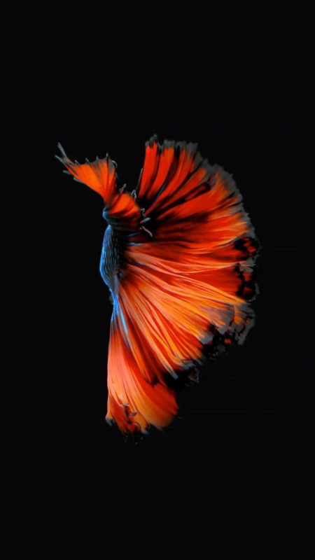 10 New Iphone Fish Wallpaper FULL HD 1920×1080 For PC Background 2021 free download how to get apples live fish wallpapers back on your iphone ios 1 450x800