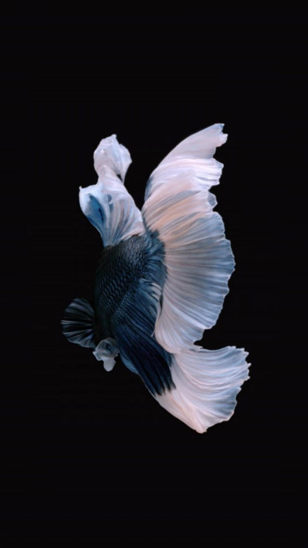 10 New Iphone Fish Wallpaper FULL HD 1920×1080 For PC Background 2021 free download how to get apples live fish wallpapers back on your iphone ios 2 450x800