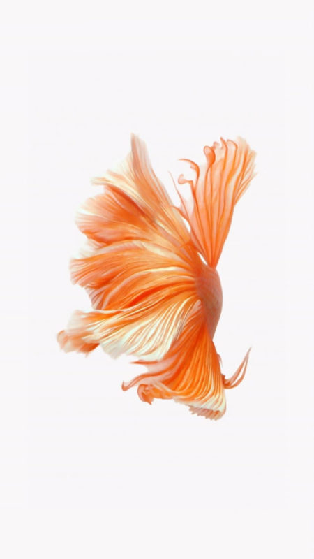 10 New Iphone Fish Wallpaper FULL HD 1920×1080 For PC Background 2021 free download how to get apples live fish wallpapers back on your iphone ios 450x800