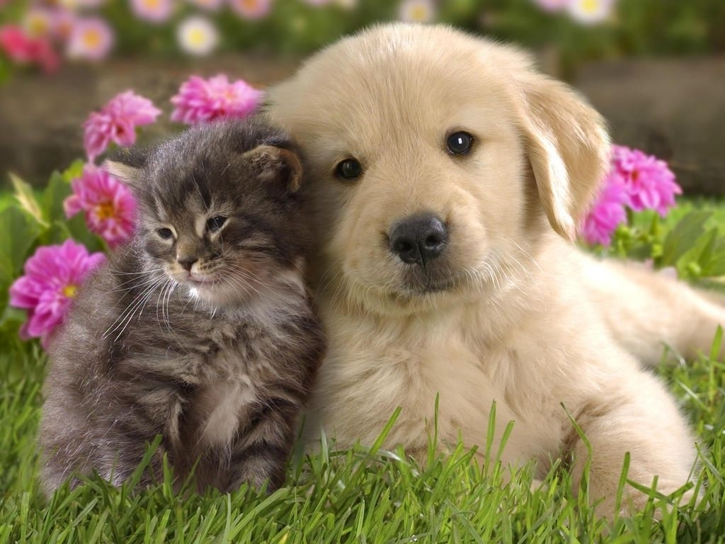 10 New Pics Of Puppys And Kittens FULL HD 1920×1080 For PC Desktop