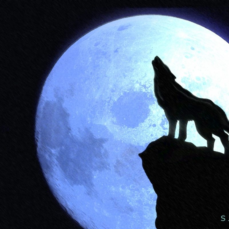 10 Most Popular Drawing Of A Wolf Howling At The Moon FULL HD 1080p For PC Background 2021 free download howling at the moonshopkins on deviantart 1 800x800