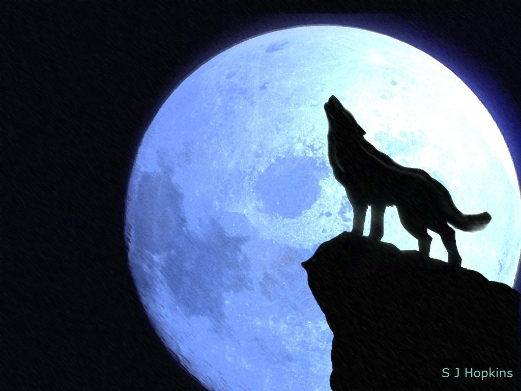 10 Most Popular Wolf Howling At The Moon Drawing FULL HD 1080p For PC Background 2020 free download howling at the moonshopkins on deviantart 1024x768