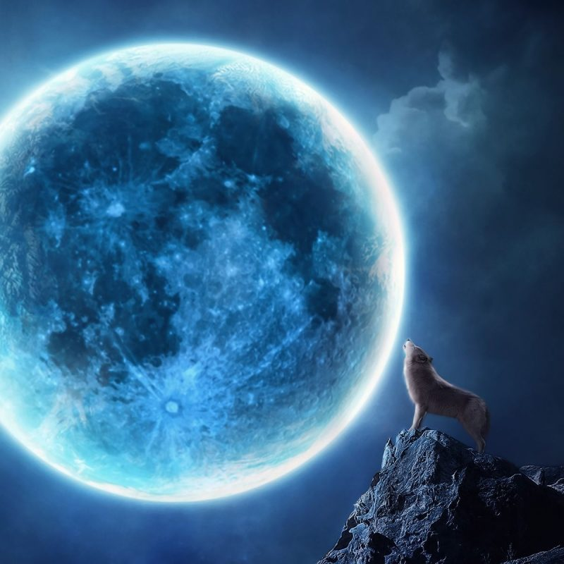 10 New Wolf Howling At The Moon Wallpaper Hd FULL HD 1080p For PC Background 2018 free download howling wolf full moon wallpapers pictures photos images babaimage 800x800
