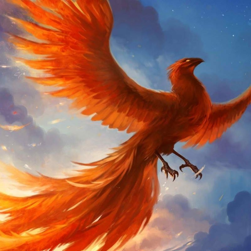 10 Latest Pics Of Phoenix Bird FULL HD 1080p For PC Background 2018 free download i am reborn in mythology a phoenix is an immortal bird that when 800x800
