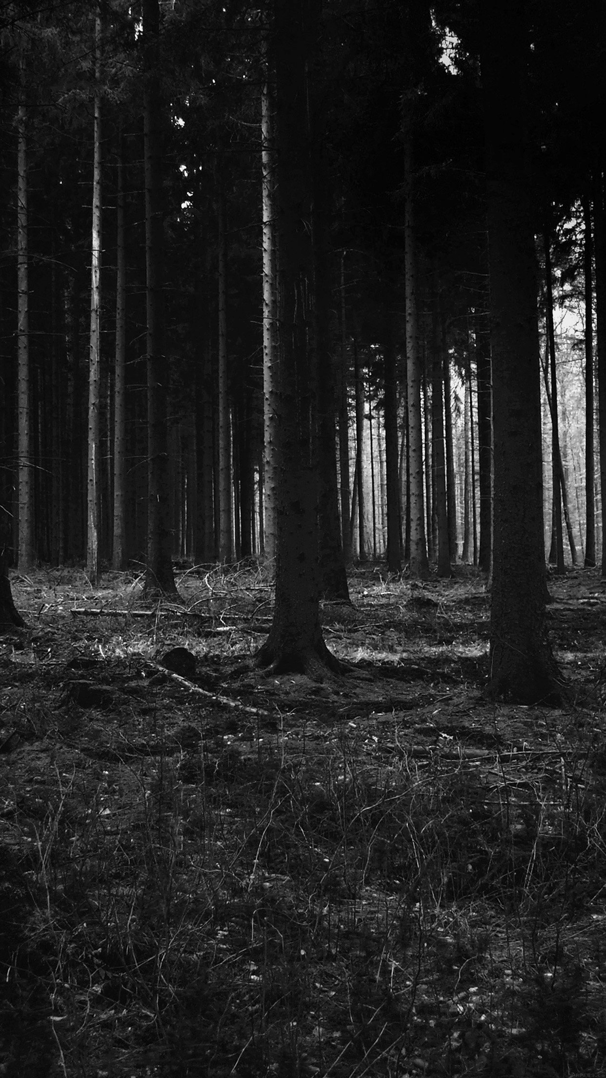 i love papers | mj53-forest-dark-scary-night-trees-nature