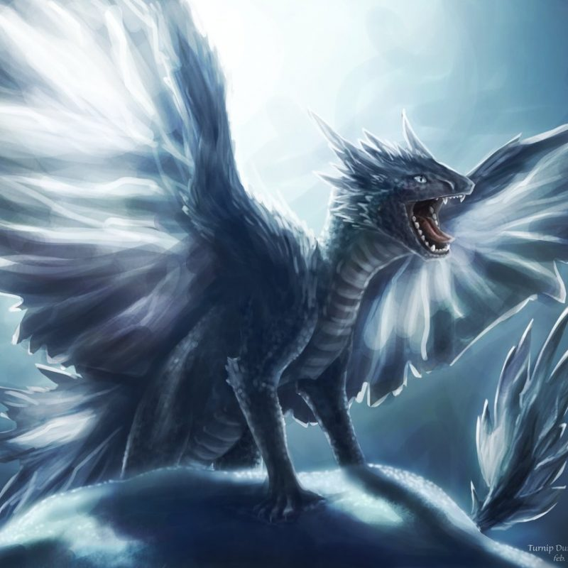 10 Best Pictures Of Ice Dragons FULL HD 1080p For PC Background 2020 free download ice dragon sibling 3turnipberry on deviantart 800x800
