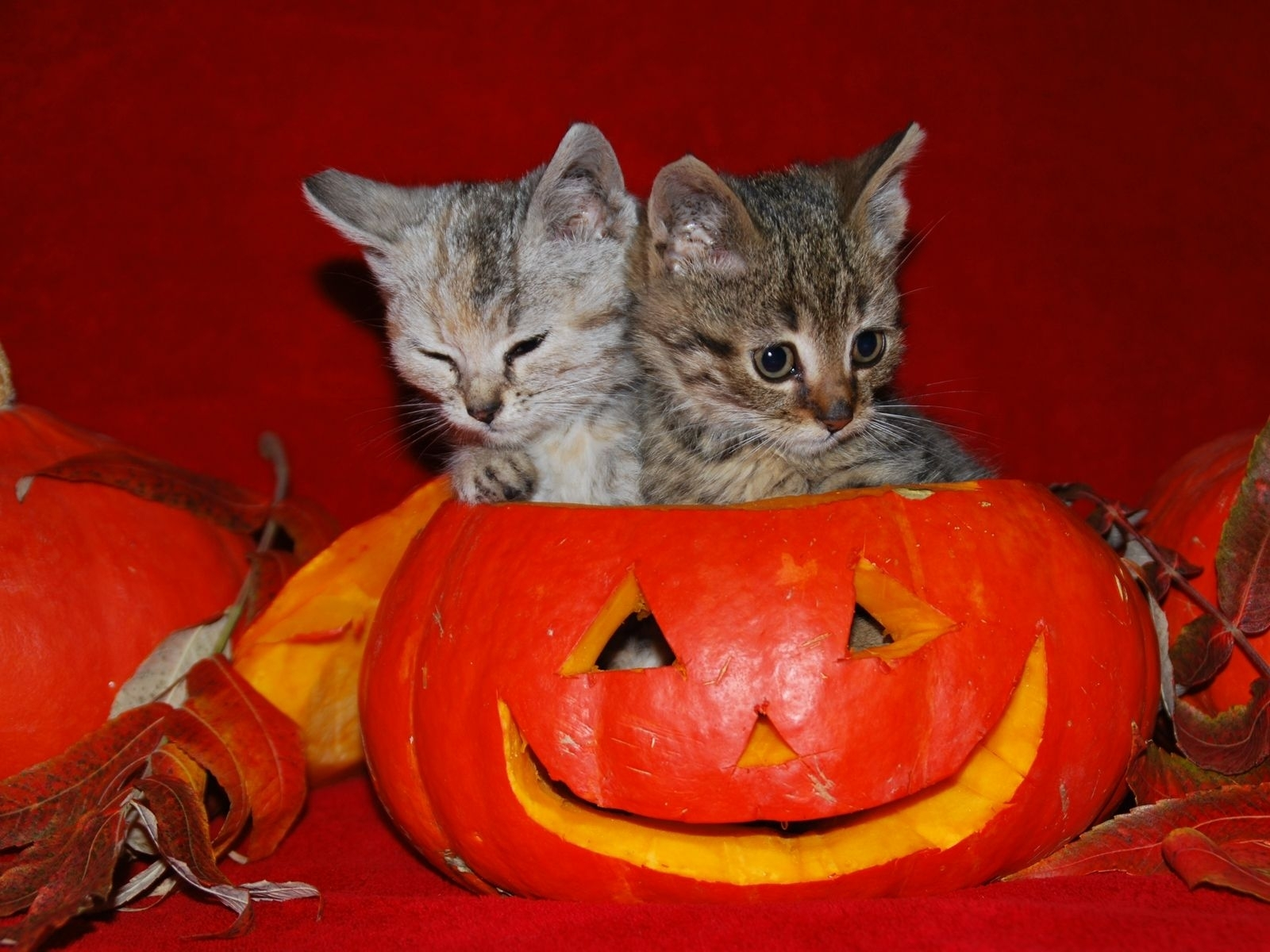 image detail for -cute halloween kitties wallpaper | autumn