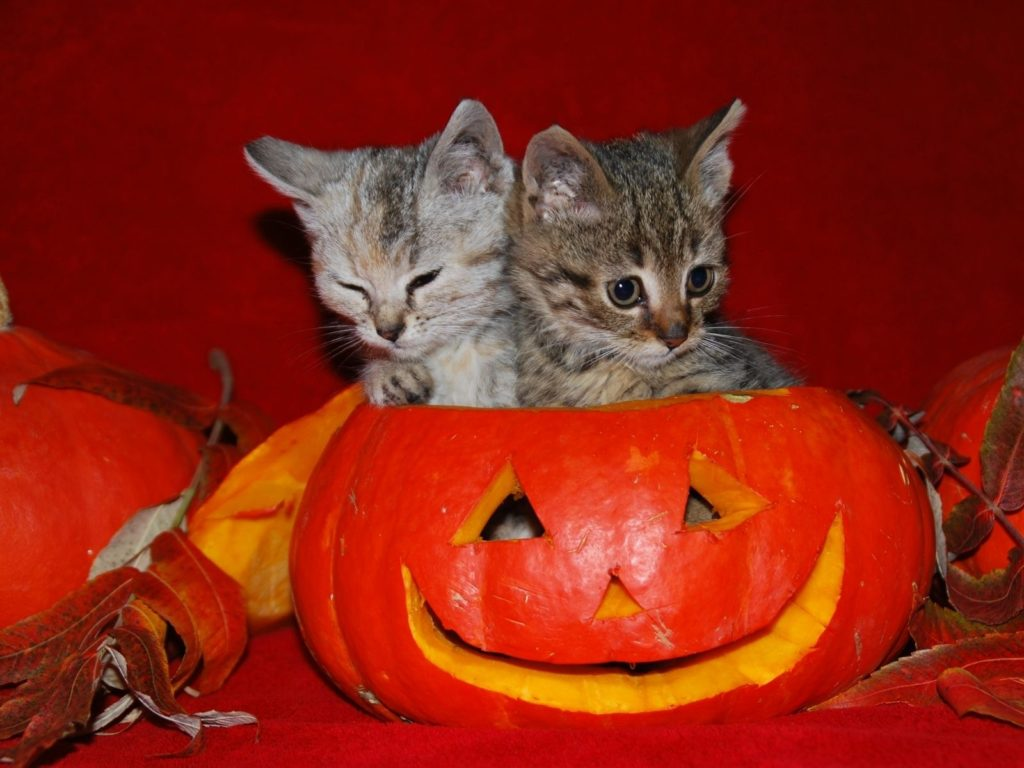 10 New Cute Cat Halloween Backgrounds FULL HD 1920×1080 For PC Desktop 2018 free download image detail for cute halloween kitties wallpaper autumn 1024x768