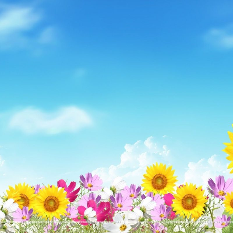 10 Latest Free Summer Background Images FULL HD 1080p For PC Desktop 2018 free download image for free summer flowers computer backgrounds desktop 800x800