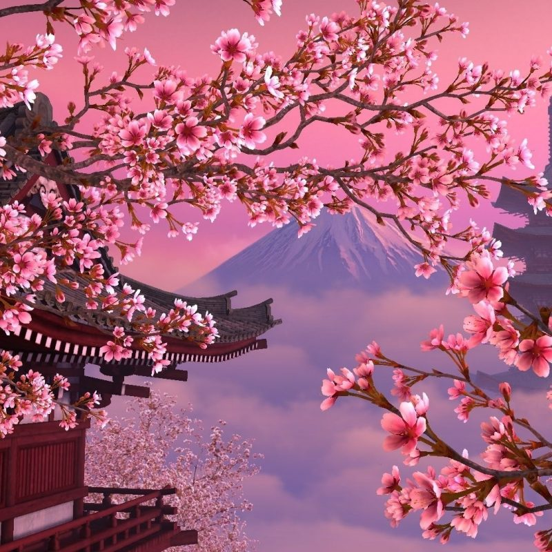 10 Best Cherry Blossom Desktop Backgrounds FULL HD 1920×1080 For PC Desktop 2018 free download image for japan sakura wallpaper desktop background 65zs6 natura 800x800