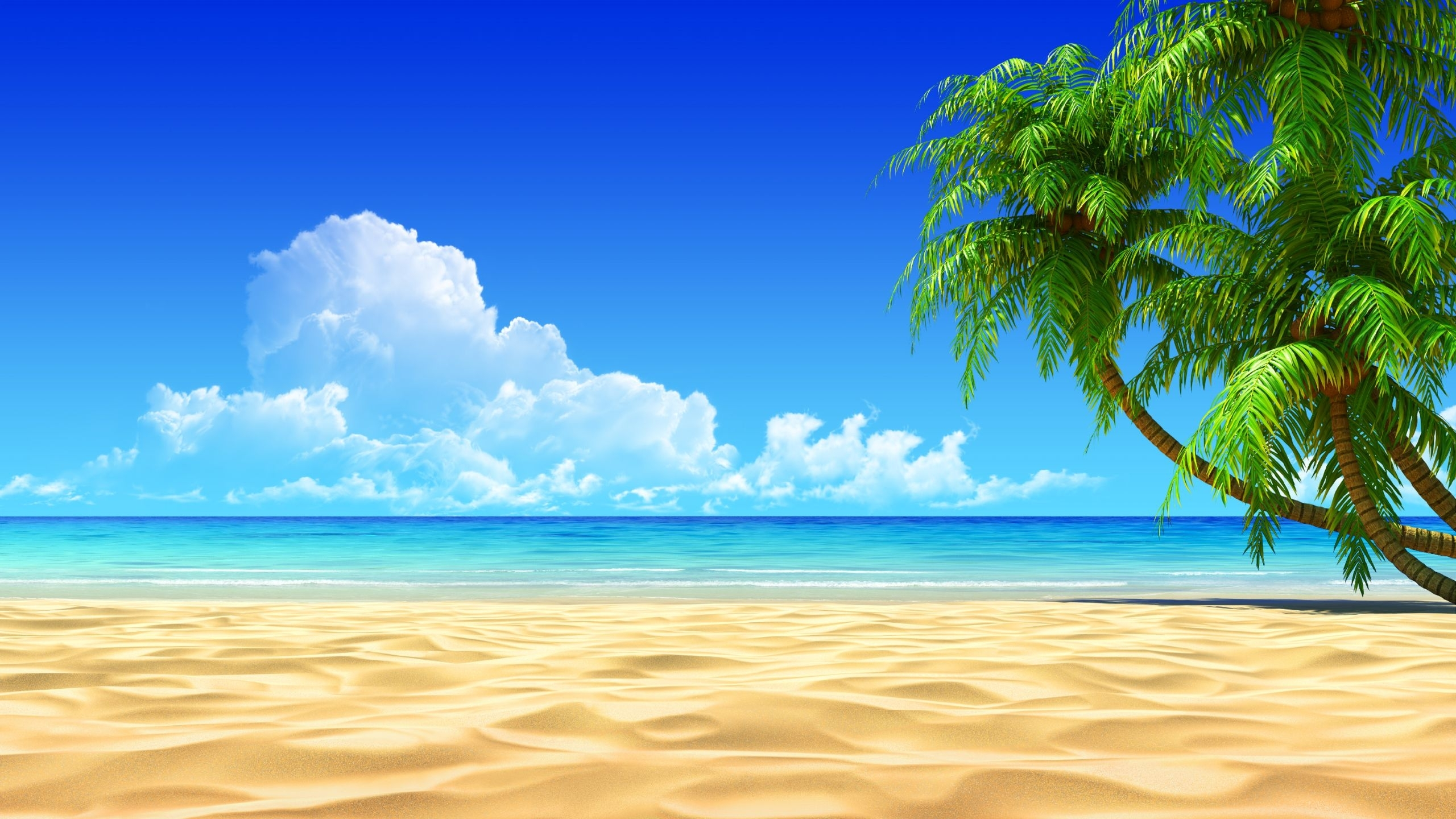 10 Top Beach Palm Tree Background FULL HD 1920×1080 For PC Background
