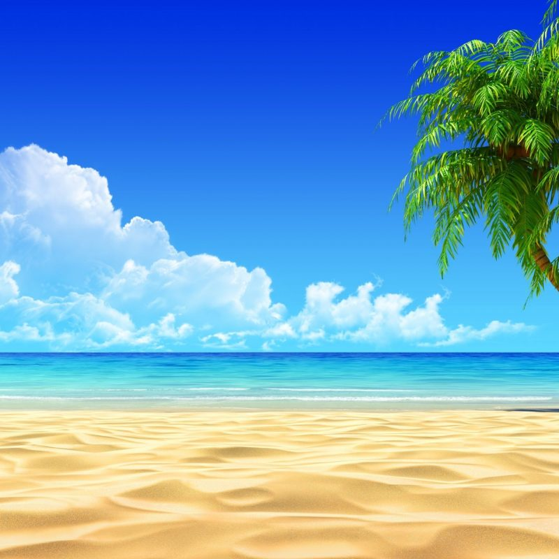 10 Best Tropical Beach Wallpaper Desktop FULL HD 1080p For PC Desktop 2020 free download image for tropical beaches with palm trees wallpapers desktop 800x800