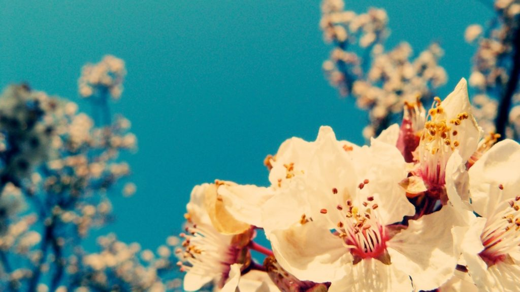 10 Latest Vintage Spring Desktop Background FULL HD 1080p For PC Desktop 2020 free download image for vintage flower hd wallpaper desktop f l o r a l 1 1024x576