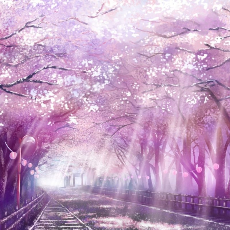 10 Most Popular Anime Cherry Blossom Wallpaper FULL HD 1080p For PC Background 2018 free download image from http pcwallart images cherry blossom tree anime 1 800x800