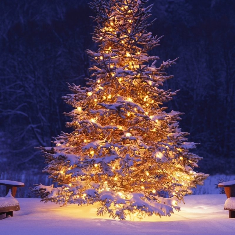 10 Best Christmas Tree Snow Wallpaper Hd FULL HD 1920×1080 For PC Background 2021 free download image hd wallpaper noel christmas 14 album wallpaper wallpapers 800x800