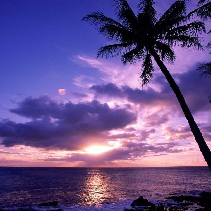 10 Top Beach Palm Tree Background FULL HD 1920×1080 For PC Background 2018 free download image result for background beach with palm trees palm trees 800x800